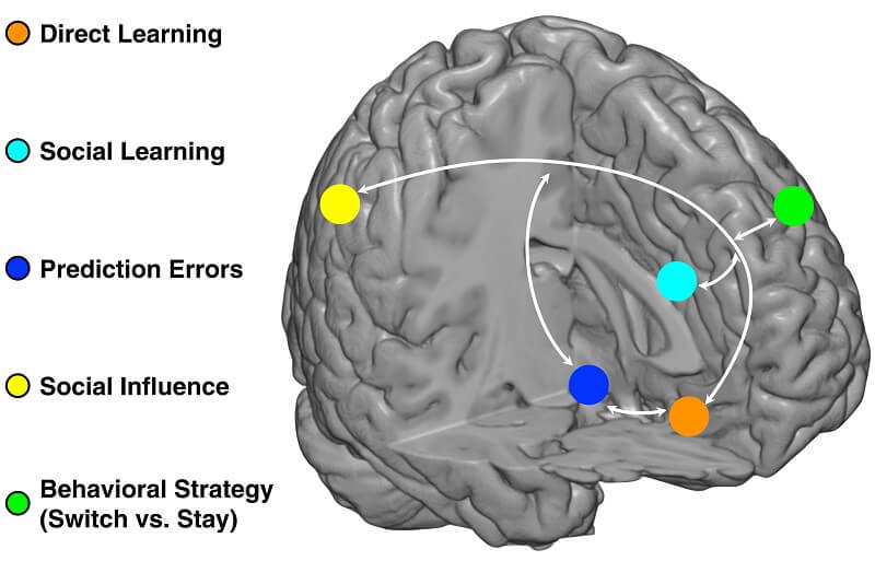 learning brain experiences map regions