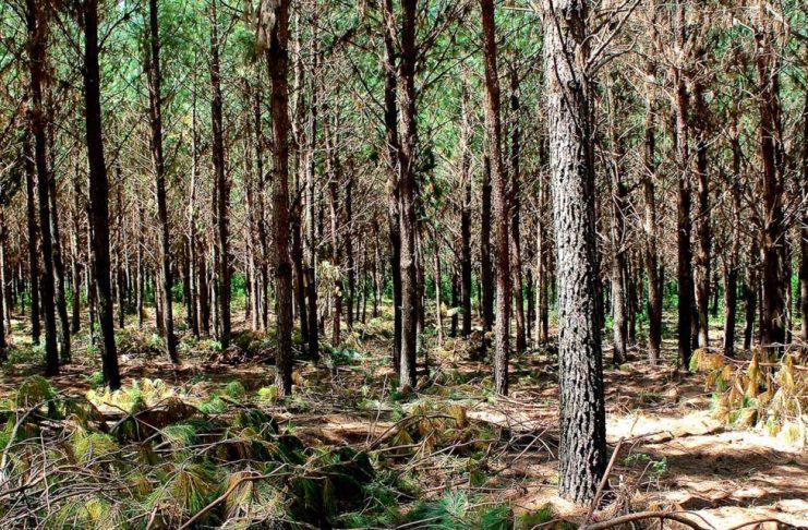SM-bosques-2442021