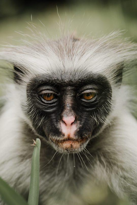 que ver en Zanzíbar Jozani Forest