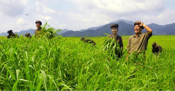 Verdant grasses at Sepho, Summer 2013 | Image: Rodong Sinmun