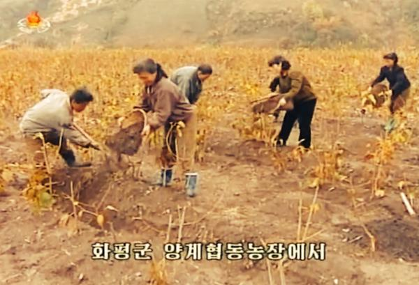 Working in the fields in Hwapyong county, northeastern Jagang province, in October 2014. Image via Chosun Central TV.