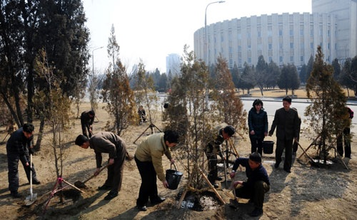 Planting trees at Central district