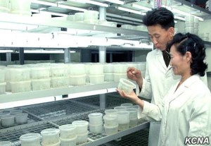 Charisma in the Biotechnology Branch Laboratory: Image KCNA