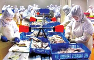 A seafood processing plant in Hunchun prepares North Korean and Russian products for export abroad. Image via Jilin Ribao, 20 September 2016.