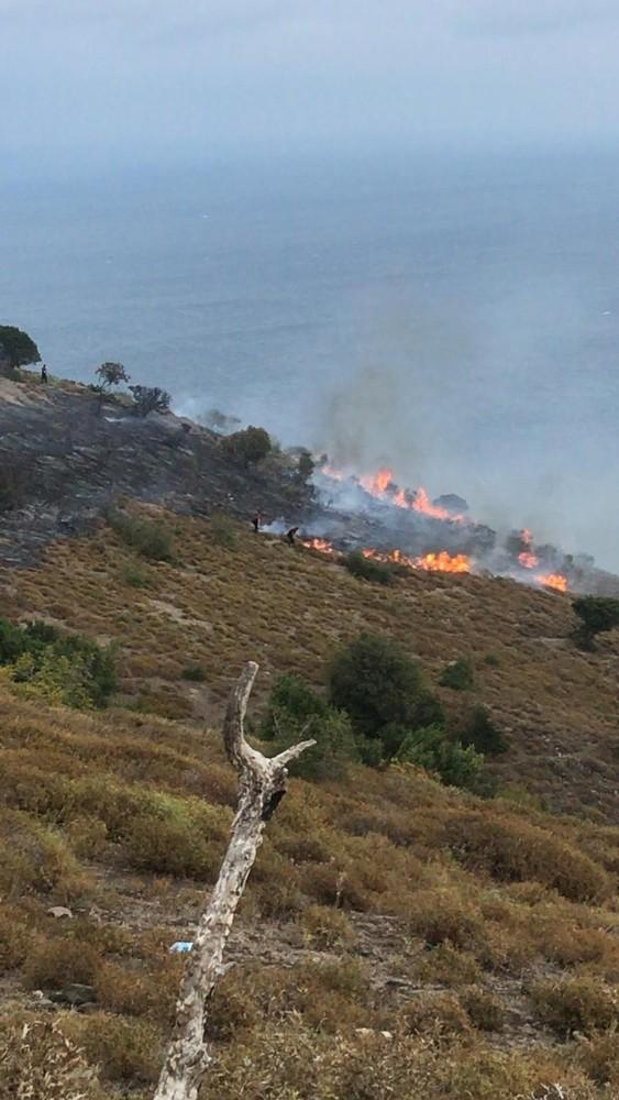 Sinop'ta anız yangını