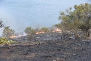 Sinop'ta örtü yangınları