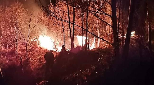 Türkeli'de orman yangını çıktı
