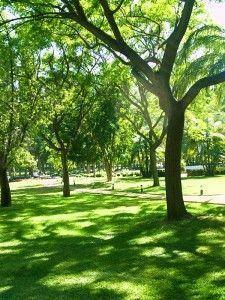 Comme les arbres, nous devons prendre soin de nos branches comme nos racines.
