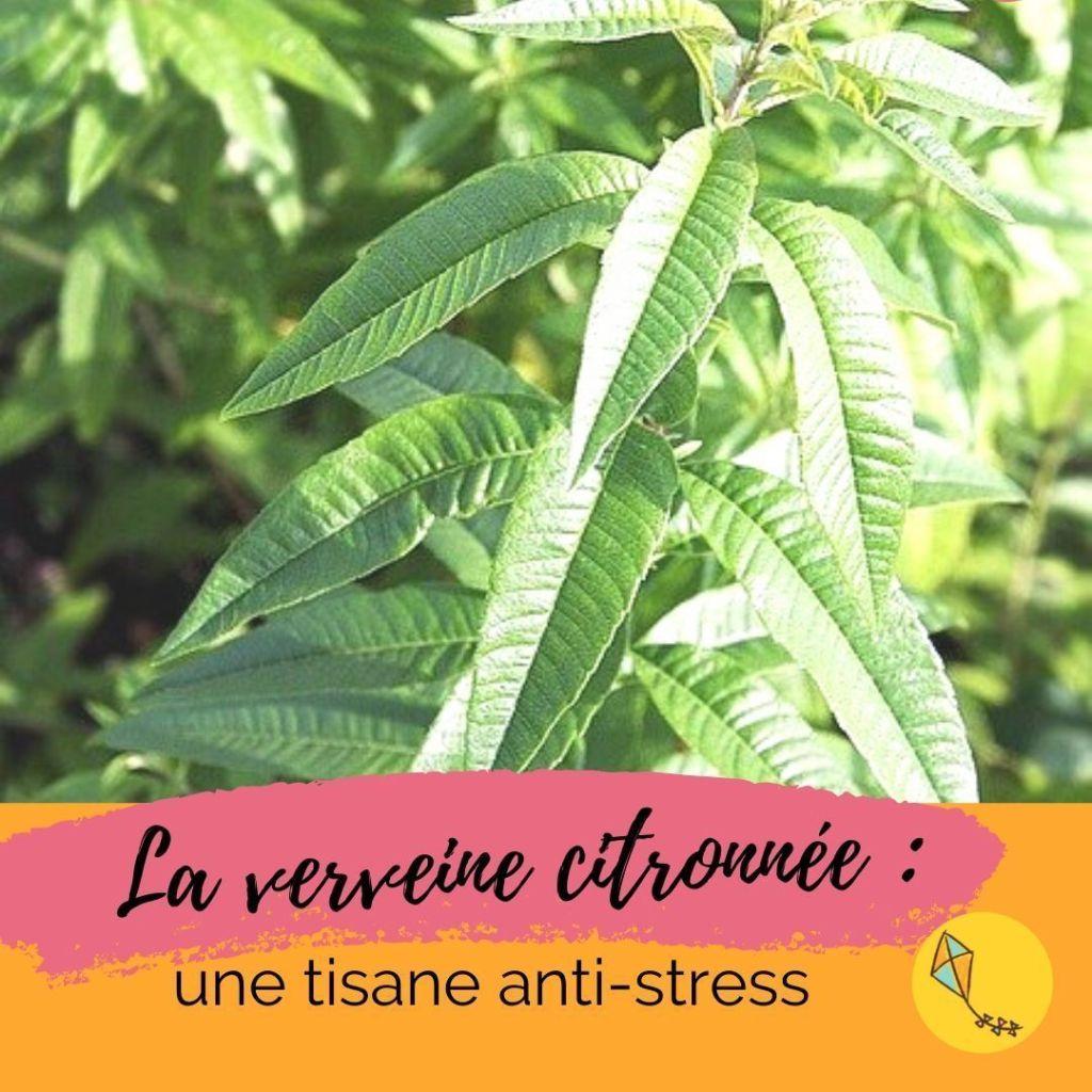 utiliser la verveine citronnée pour aider les enfants stressés à retrouver la sérénité.