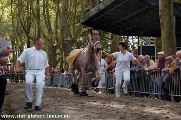 2010-10-03-belgisch-trekpaard_b
