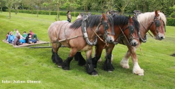 2013-05-26-trekpaarden_Dag-van-het-park_AA