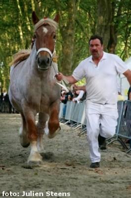 2013-09-29-brabants-kampioenschap-trekpaard_09