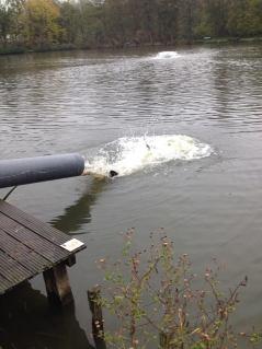 2013-12-02-vis-voorvisvijver-Ruisbroek_02