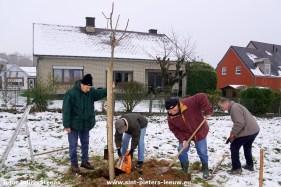 2017-12-02-aanplanten hoogstamfruitbomen arboretum Berchemveld (12)