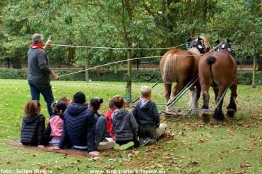 2018-09-30-trekpaardendag-Coloma (15)