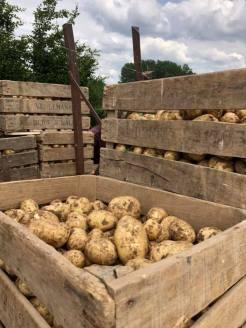 2019-09-07-hoeve-lemaire-aardappelen_01