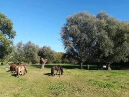 2020-02-25-paard