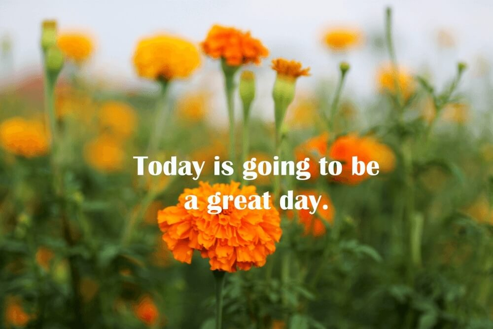 Beautiful good morning of Inspirational motivational with marigold flowers blossom