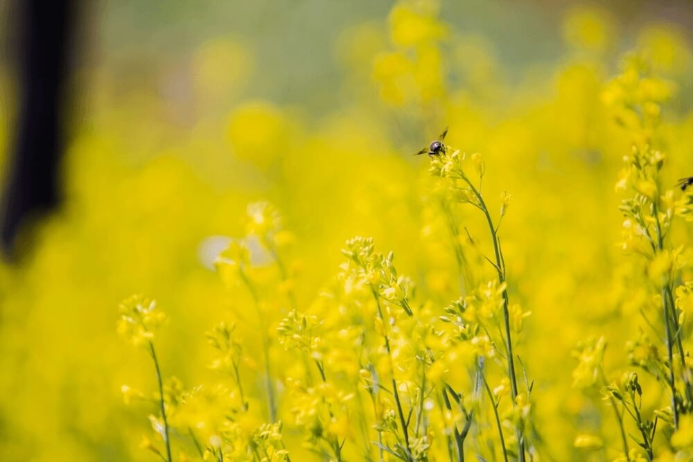 Good morning images of Many beautiful yellow flowers