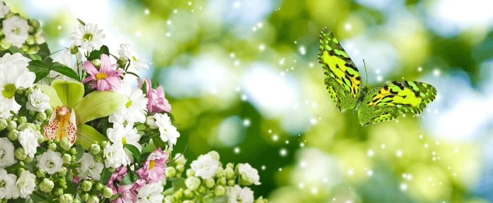 Good morning images of  flowering branch and a butterfly