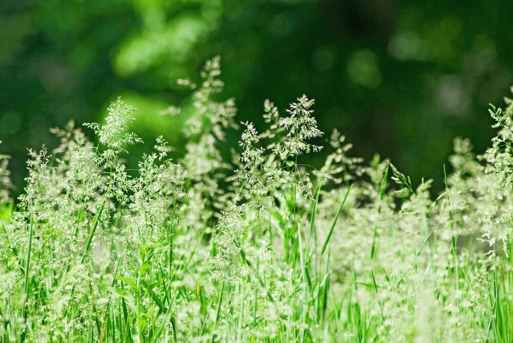 Good morning images with grass in field