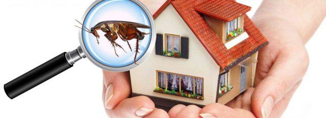 Pest Control Bogor