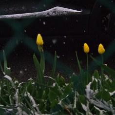 Neige de printemps, Saint-Jean de Maurienne, 1er mai 2017