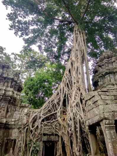 Świątynia Angkor i Drzewo z Tomb Raider Poipet - granica Kambodży