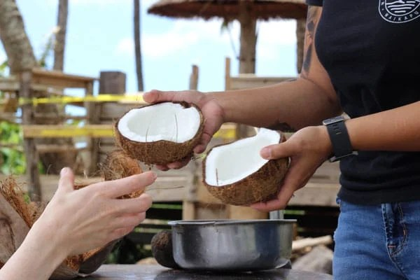 Maui Tropical Plantation Tropical Express Tour Coconut husking demonstration