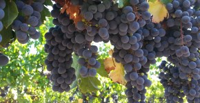 Sonoma Valley CRUSH at St Francis Winery