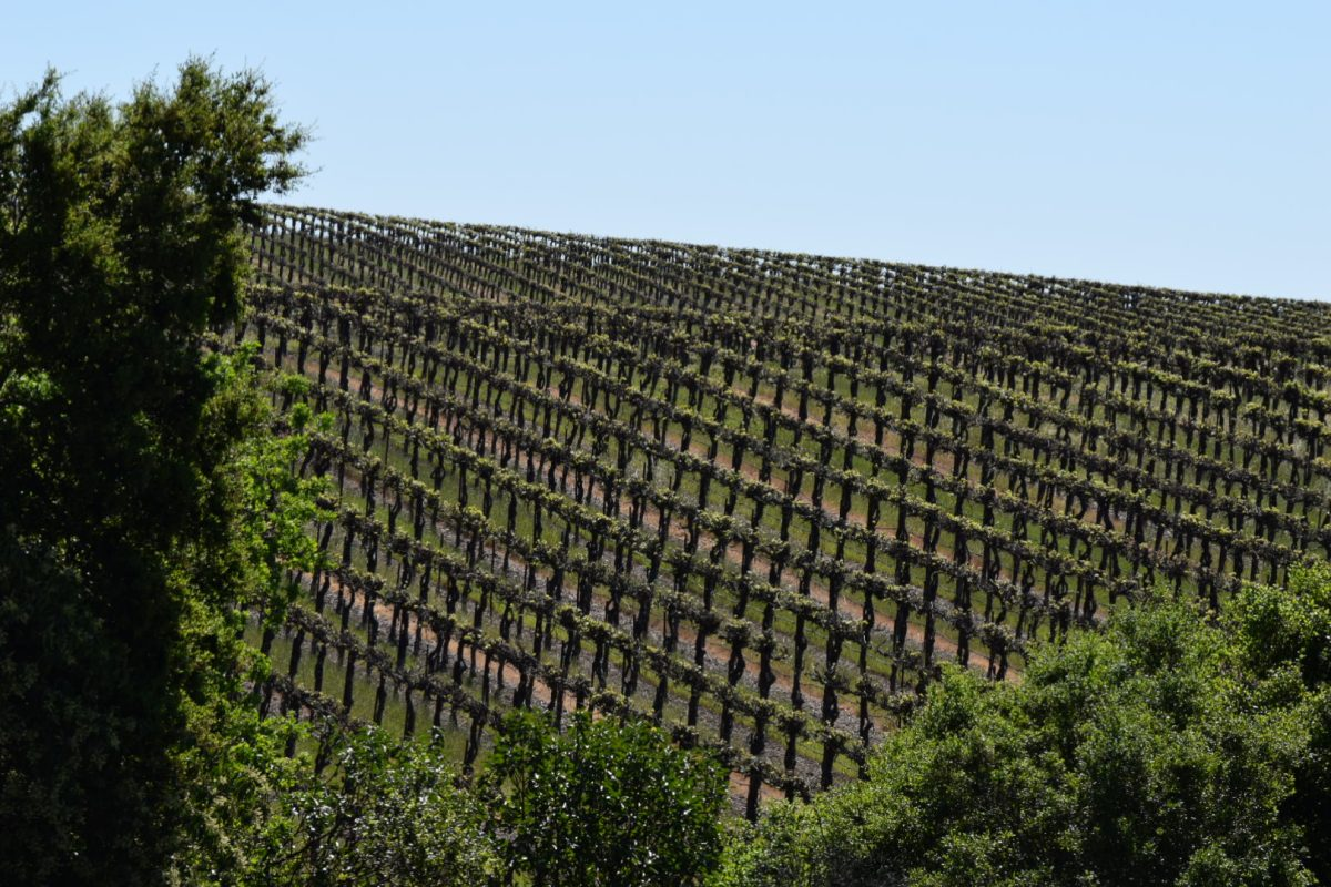 Reeve Wines along Dry Creek Valley in Healdsburg