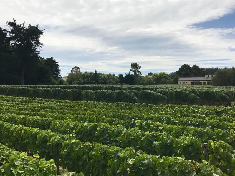 Craggy Range Vineyard.JPG