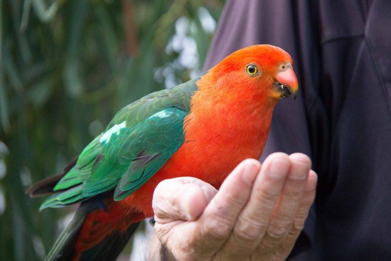 Kennett River Birds