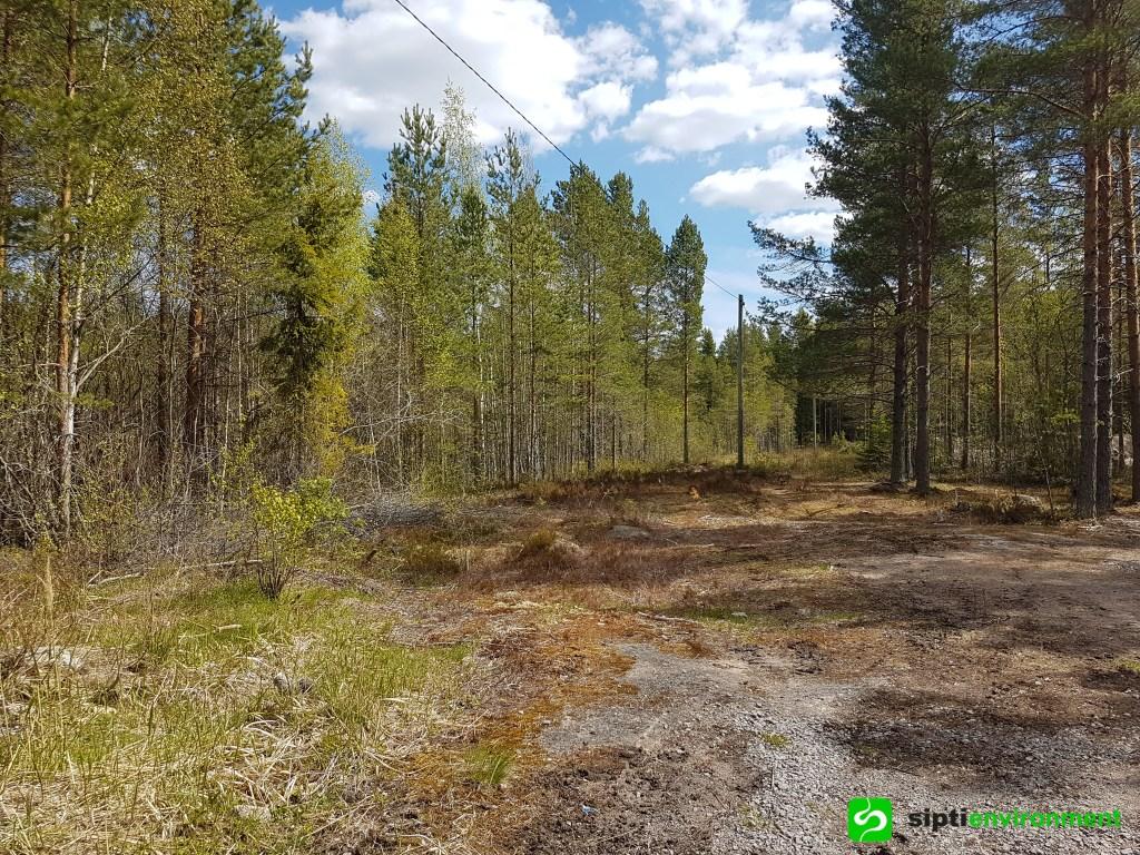 Referenssikuva metsäalueesta