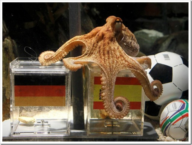 octopus_Paul_2