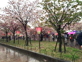 rainsakura0803