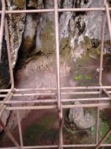 Penemuan fosil di Goa Pawon, Padalarang