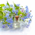 20 Best Essential Oils for Energy and Focus