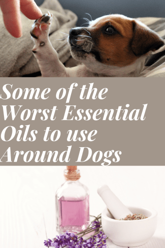 What essential oils are bad for dogs