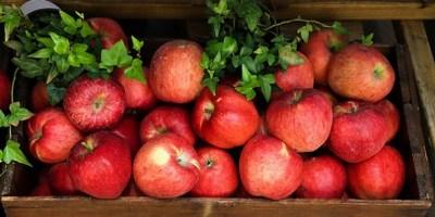 Tarım Devrimi İnsanlık İçin Bir Gerileme Mi?