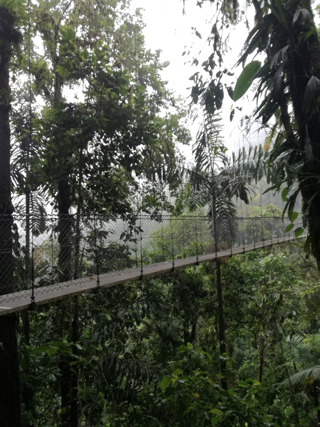 Rainforest experience