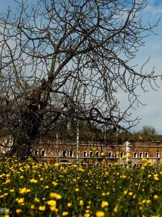 Venezia Mestre: Forte Marghera in fiori
