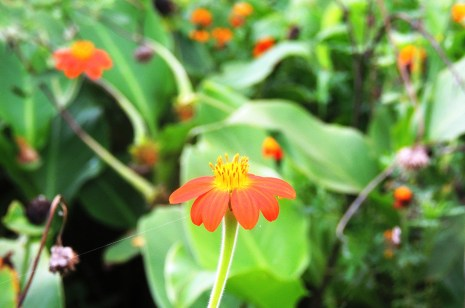 lumo-conservancy-flower-1