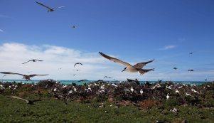 Why it's called Tern Island