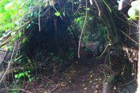semak belukar yang membentuk terowongan