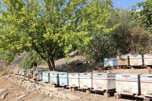 Şırnak'ta yılın son bal hasadı yapıldı