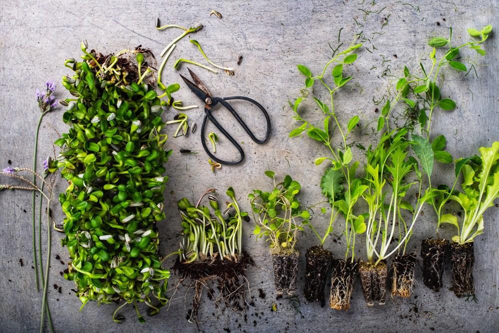 90 אחוז בריא - ספר המתכונים של שרון בר גיל. מתכון לקרקר זרעים וממרח אדממה ואבוקדו