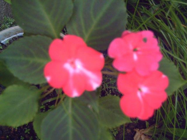 Bunga di Tepi Jalan