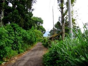 Jalan menuju Pondok Halimun