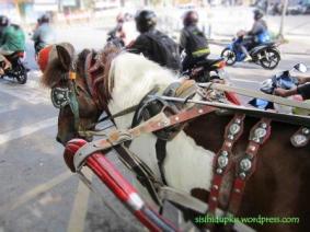 Sang kuda yg berjasa...